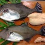 巨大魚の横綱と海のフォアグラ?鍋の予感しかしない・・【鉄腕ダッシュ】