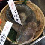 マツコ&有吉の怒り新党で三大○○?鍋にすると言ったらこれ?日本海三大珍魚