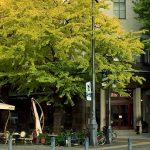 ゴチバトルの横浜高級欧州料理店はどこ?アルテリーベ横浜本店?アクセスや価格も気になる!【ぐるナイ】