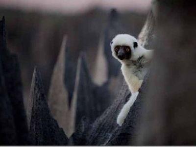 マダガスカルの針山は何処?白いサル!デッケンシファカがかわいい!鳥葬の国は何処?佐藤健寿が語る鳥葬を調査!クレージージャーニー