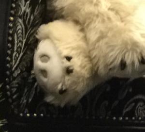マツコ会議の麻布シティデンタルクリニックのシロクマのぬいぐるみのメーカーは?価格や通販は?