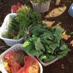 おしゃれイズムで堺雅人と藤木直人の絶品イタリアン!鎌倉野菜の名店オステリアジョイアの野菜もすごい!