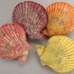 ヒオウギ貝の色は着色?理由は?天然物は?旬や通販で買える?【満天青空レストラン】