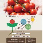 満天青空レストランのオスミックトマトの通販は?高糖度フルーツトマトの農園の場所や栽培方法は?