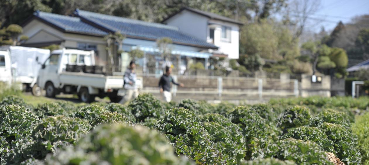 満天青空レストラン小田原の150種類野菜農家やレストランの場所は?生で食べれるかぼちゃや夏野菜の通販は?