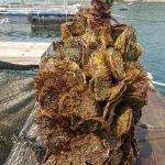 クロアチアの海底熟成ワインの通販は?アンフォラ瓶のNavis Mysteriumの海底ワイナリーEDIVOって?【世界の村のどエライさん】