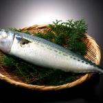 鴨川港産釣り鯖ハイカラサバが青空レストランで絶賛!釣り鯖干物の通販や特徴は?
