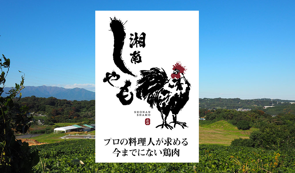 湘南しゃもの卵や精肉の通販・お取り寄せは?青空レストランで紹介の神奈川県黒い鶏!