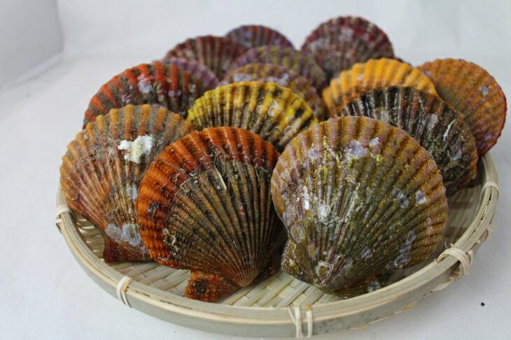 あっぱっぱ貝の通販は?伊勢町の虹色の貝の色や名前の由来は?【所さんお届けモノです】