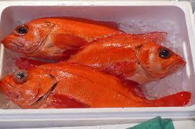 べにあこうの価格や味は?通販はある?所さんお届けモノですで魚芸人ハットリ幻の海のルビーを釣る?